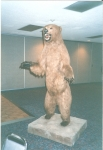 Thanks to Lawrence Owen - this is the grizzly our class donated to SHS in 1984